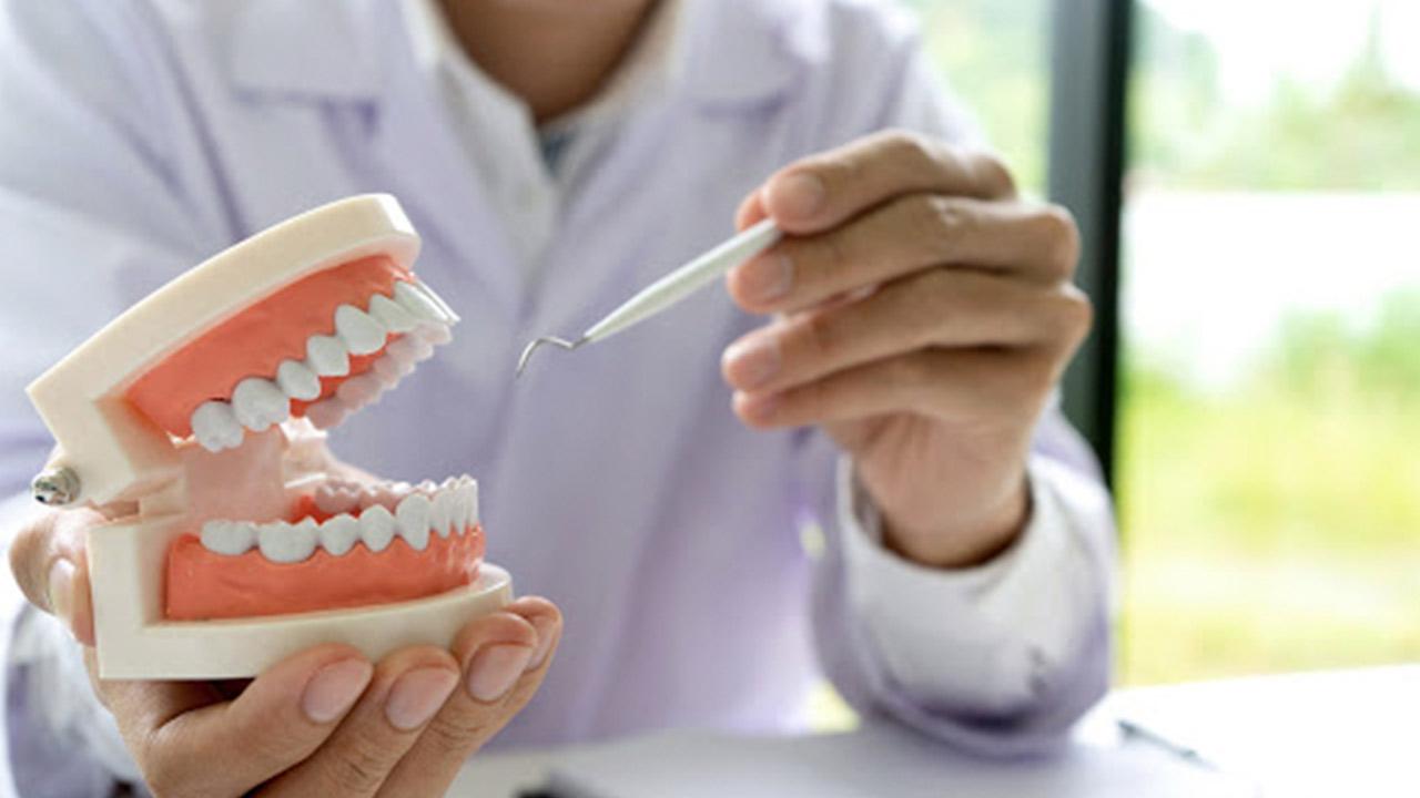 Anatomia Dental Resumida