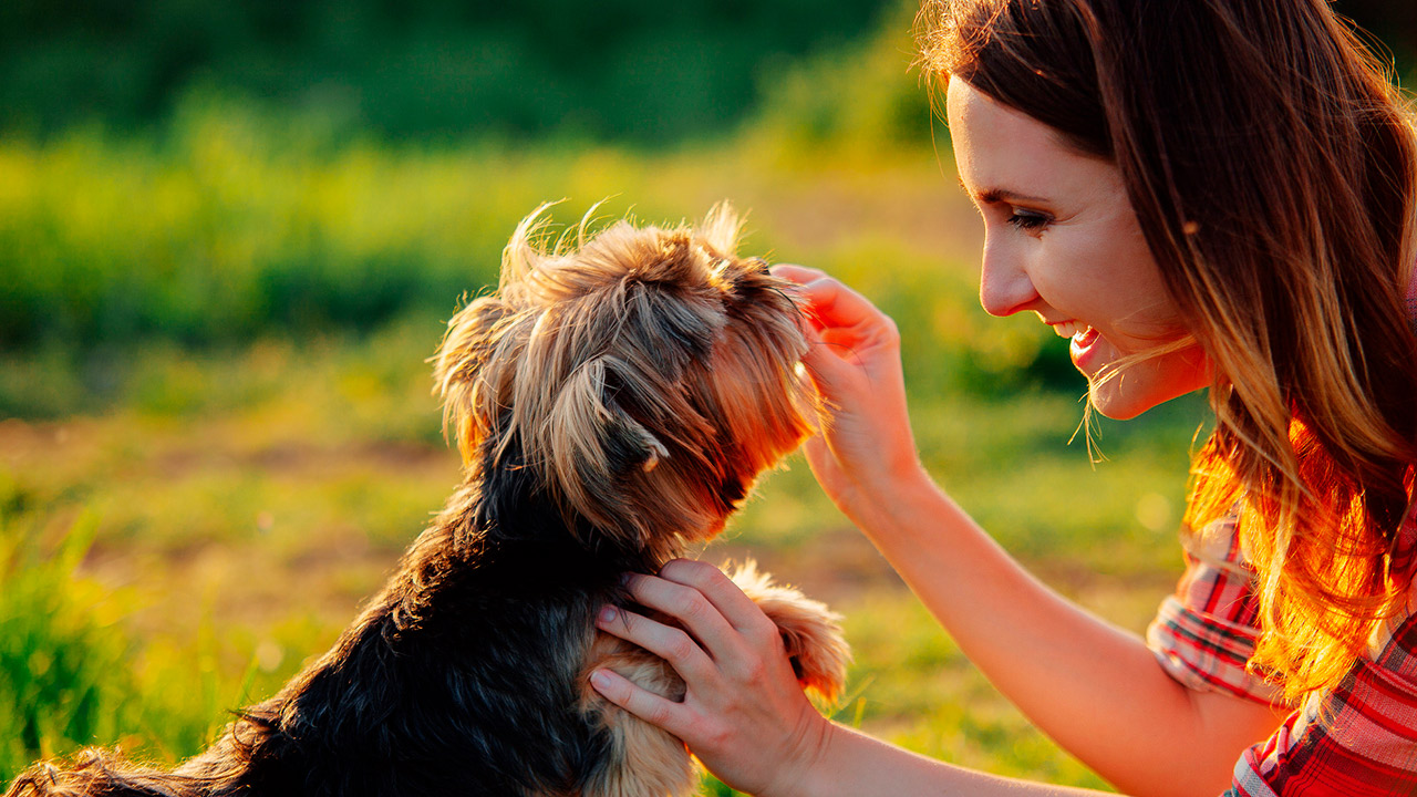 Educanino – Adiestramiento Profesional Canino