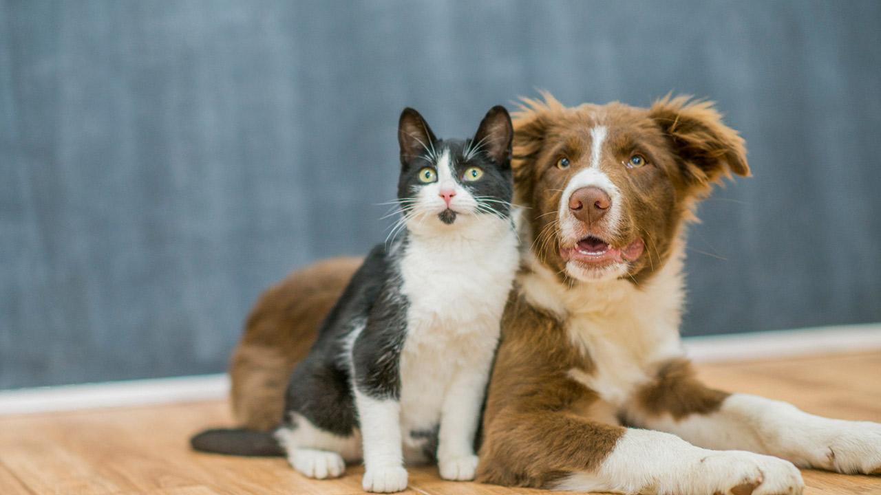 Pasteleria Canina y Felina
